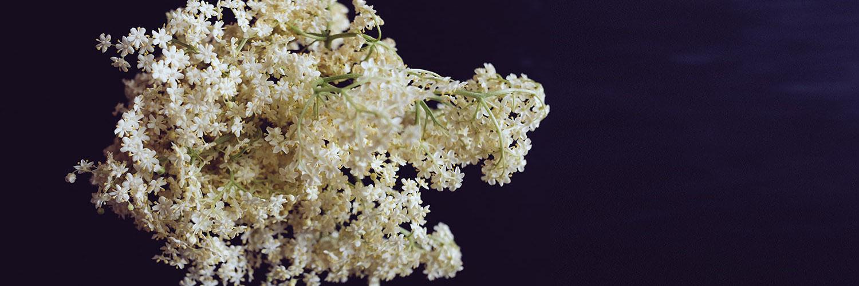 Recette printanière pour sortir de l'ordinaire: pesto de fleurs de sureau