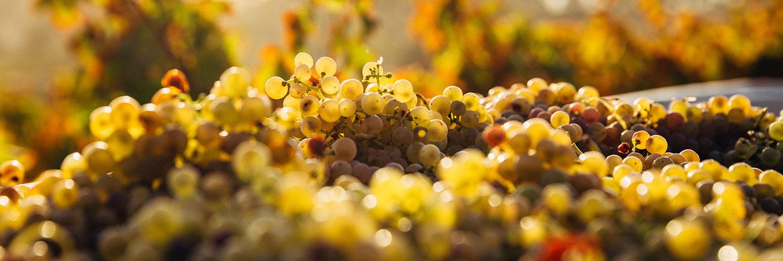 Les vignobles les plus surprenants de la planète