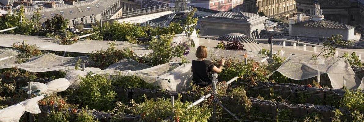 The roofs of Paris, the future urban farms?